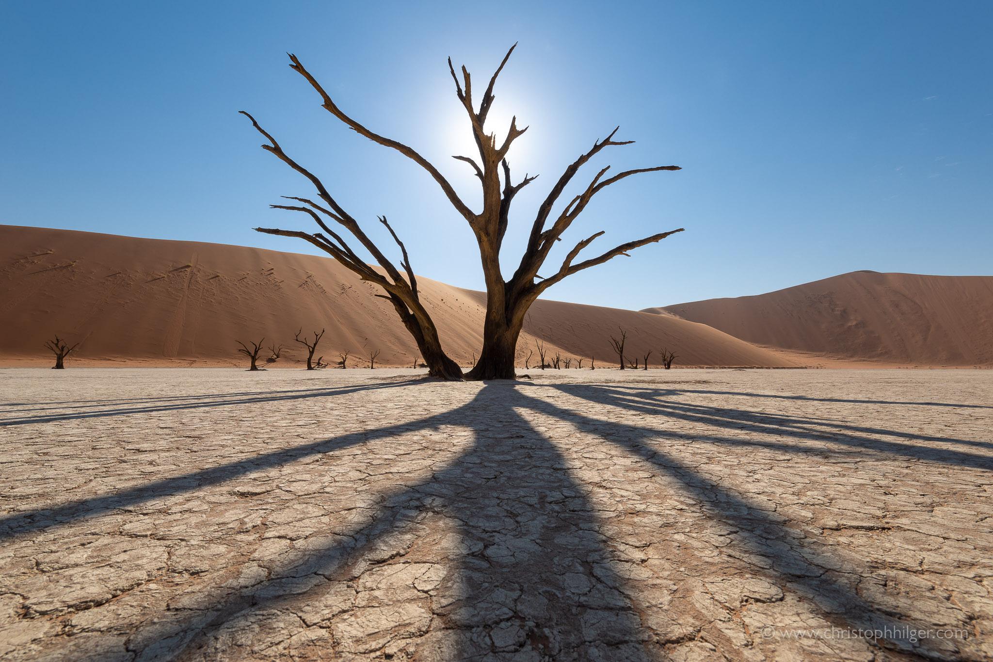 Abgestorbener, alter Kameldornbaum im Deadvlei, Sossusvlei, Namibia